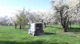 София с нови ел. камиончета за поддръжка на парковете