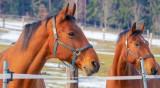 Елитни коне за терапия на болни деца изгоряха в пожар