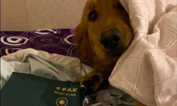 Куче изяде паспорта на момиче, провали пътуване до Ухан