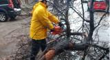 Паднали дървета, клони... Силният вятър вдигна на крак Столичната община