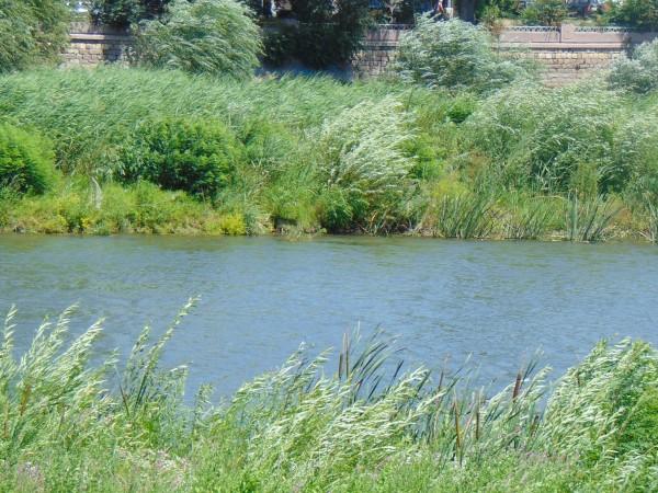 Няма превишения на стандартите за пестициди и индустриални замърсители в
