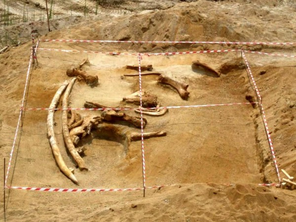 Резултатите от генетичните изследвания показват, че последните мамути на планетата,