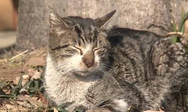 Криза в Пловдив с бездомните котки, станали 50 хиляди?