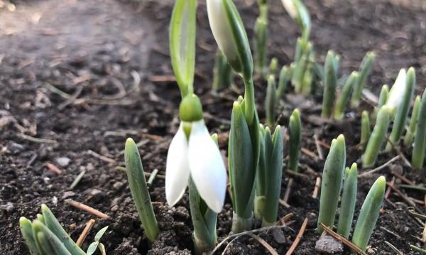 Времето: Седмицата започва с пролетни температури