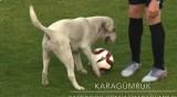 """Лабрадор """"нахлу"""" на терена по време на мач в Турция"""