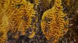 Задържаха двама, отмъкнали 12 пчелни кошера