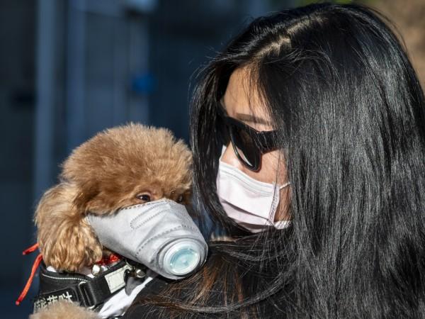 Технологичният център в Шенжен, Южен Китай, забранява консумацията на кучета