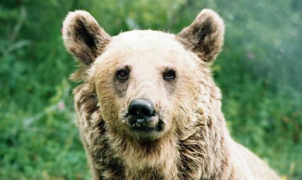 Танцуващата мечка Стефка почина на достойните 36 г.