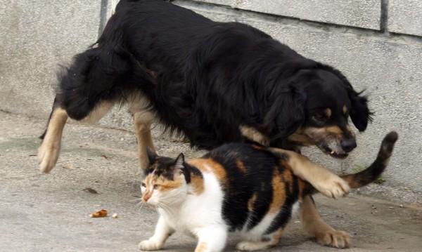 Израелски учени: Котките са по-умни от кучетата