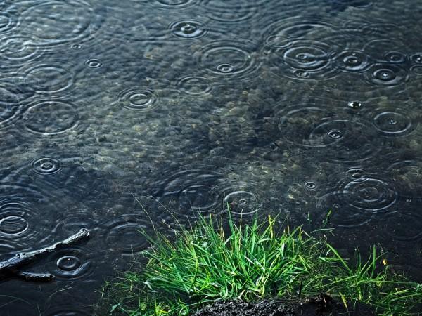 Днес преди обяд ще има почти повсеместни валежи от дъжд,