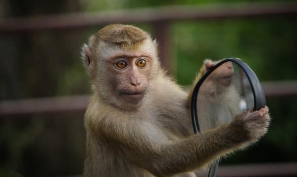 Маймуни в Тайланд нападат градове заради коронавируса