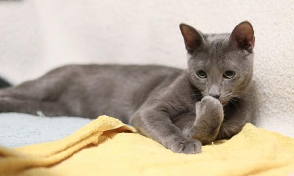 Лютодрава, рибожора, мстикуся... старославянските имена за котки