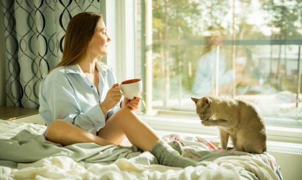 Изолация - погрижете се за домашните любимци