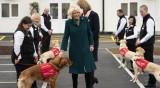 Експеримент: Обучават кучета да откриват COVID-19