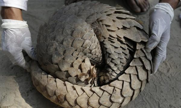 Ще има нова пандемия, ако Китай не забрани търговията с диви животни