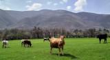 Слънцето ще огрява Западна България, облачно на изток