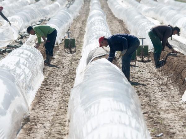 Германия все пак реши да приеме сезонни работници от Източна