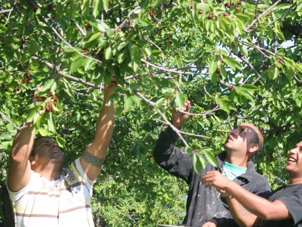"""Европейските """"зелени коридори"""" за работници застрашават българското селско стопанство и"""