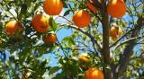 Гръцки фермери търсят сезонни работници
