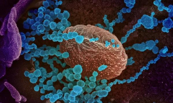 Учени: Коронавирусът няма да изчезне с топлото време
