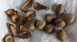 Масло от мурумуру - за по-хидратирана кожа