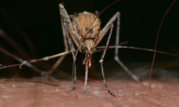 Кърлежите и комарите не разпространяват COVID-19