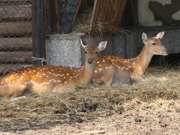С пролетта се появиха първите бебета животни, съобщиха от Софийския