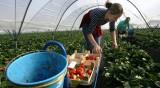 МВнР препоръчва сезонните работници да не пътуват