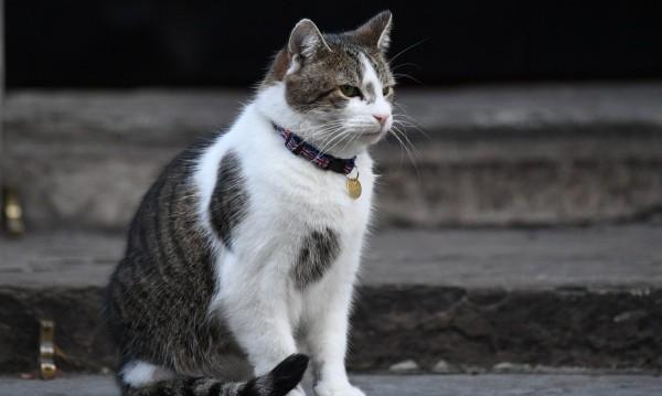 Котките - най-подходящи за тестване на ваксини за коронавирус