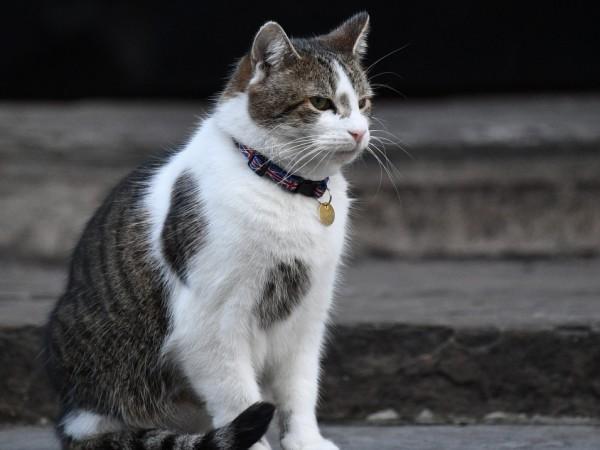 Котките са най-податливи на COVID-19, следователно те могат да се