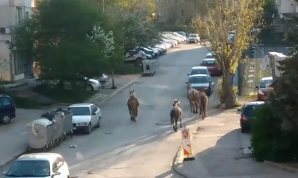"""Сигнал: Препускащи коне в столичния кв. """"Овча купел"""""""