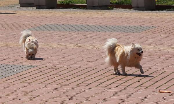 Над 100 такси за кучета платени в Монтана за 2 дни