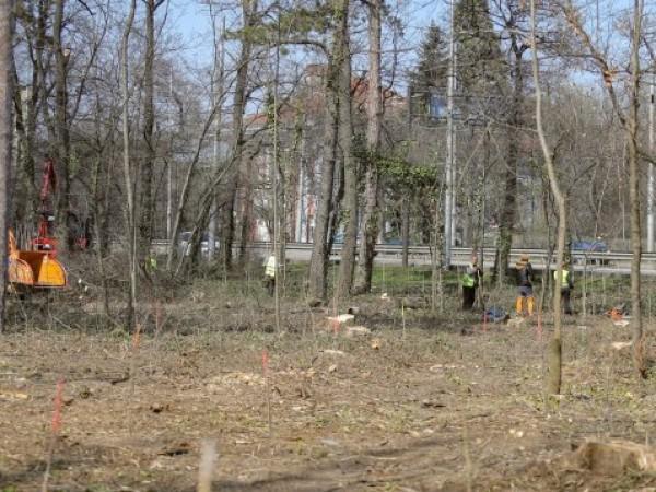 Снимки на подрязани дървета в страната предизвикаха широко недоволство в