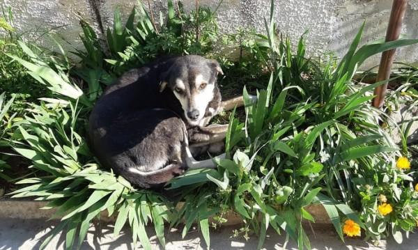 HelpBook: Агресивно куче, нападнало дете, е на свобода във Варна