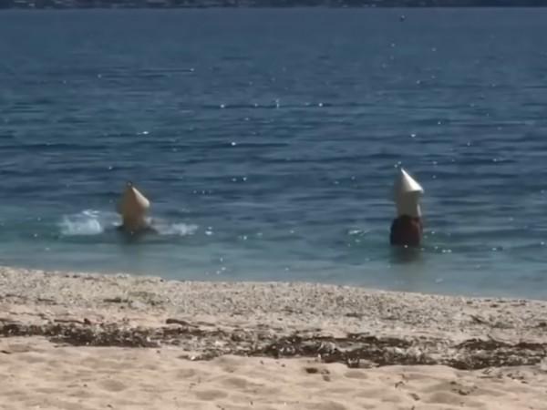 Двама французи се маскираха като шамандури, за да поплуват в