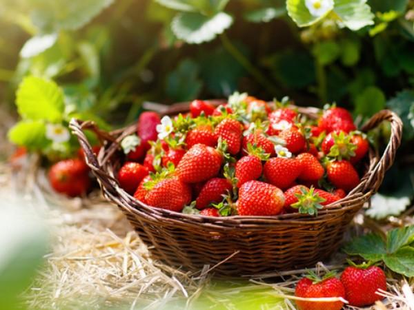 Сезонът на ягодите вече е тук и е време да