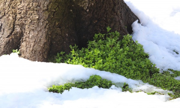 """Сняг валя в местността """"Картъла"""" в Родопите"""