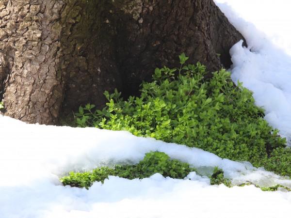"""Сняг е валял днес в местността """"Картъла"""" в района на"""