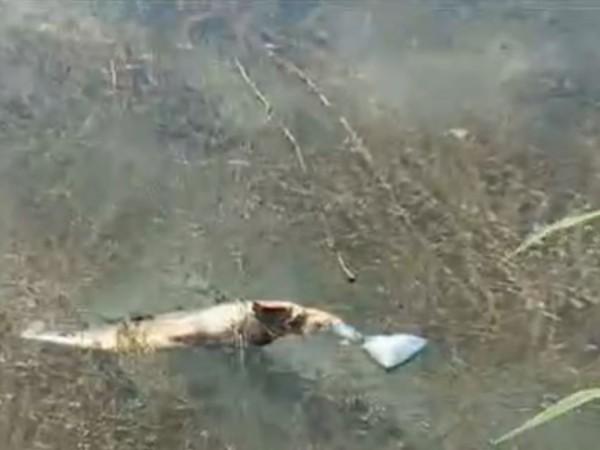 Жители на русенското село Щръклево се натъкнаха на мъртва риба
