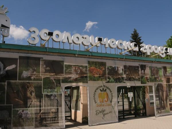 За Деня на детето Зоологическата градина в София обяви, че