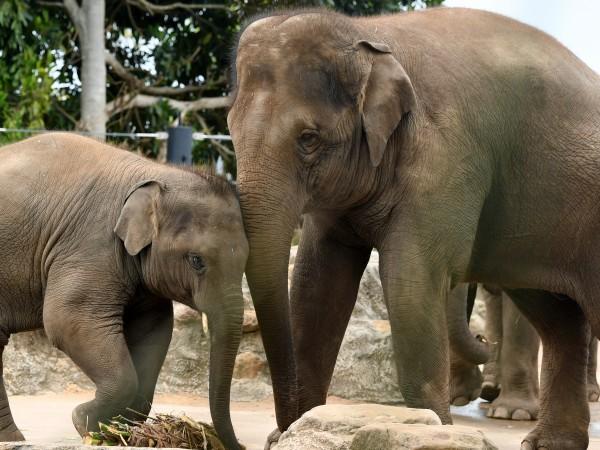 Мистериозната смърт покоси слонове в Ботсвана и озадачи властите в