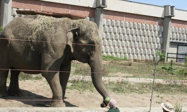 Слоницата Артайда от Софийския зоопарк става на 57 години