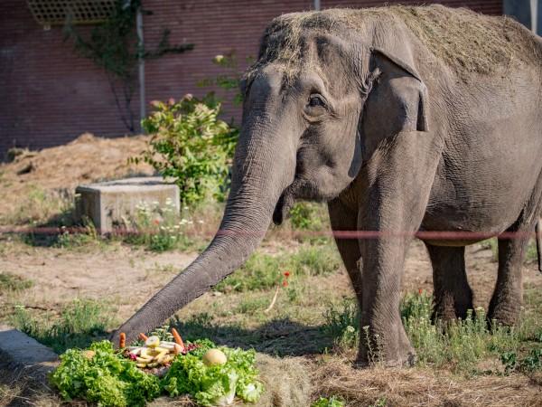 Индийската слоница Артайда, която е един от символите на Софийския