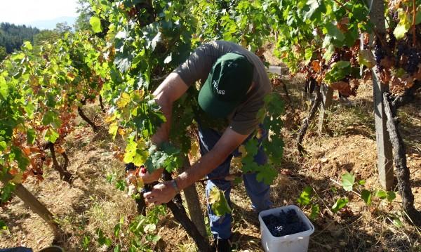 Безработните запазват помощи, ако се включат в земеделието