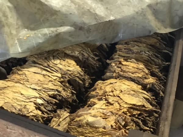 Един тон незаконен тютюн, който е бил подготвен за пакетиране,