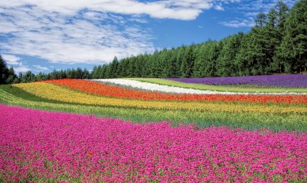 Кои са цветята, символи на някои европейски страни?