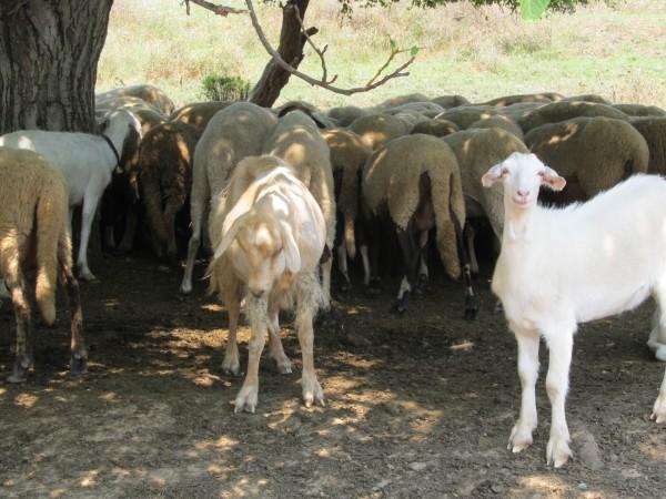 Четирима работници от ямболското село Маломирово са заразени с ку-треска.Те