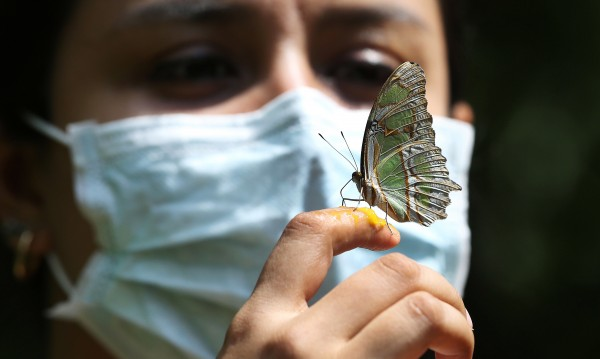 Жертвите на COVID-19 в Латинска Америка и Карибите вече са над 10 000