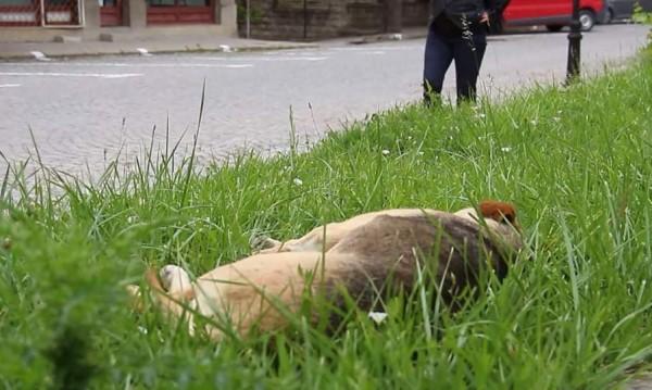 Парк в Горна Оряховица осъмна с трупове на кучета