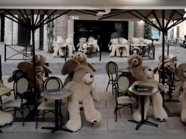 Необичайни посетители бяха забелязани на кафе в Бордо, Франция. Големите